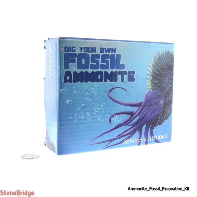 Dig Your Own - Ammonite Fossil - Excavation Kit
